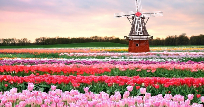 The Attractions of Investing in the Netherlands