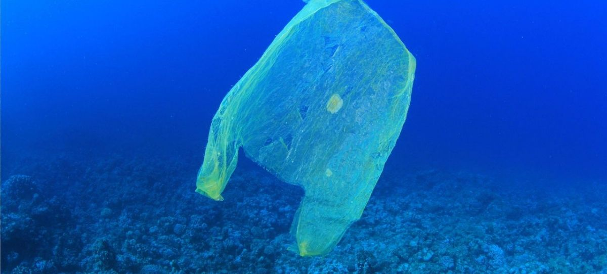 Bag Bans: The War on Plastic Bags