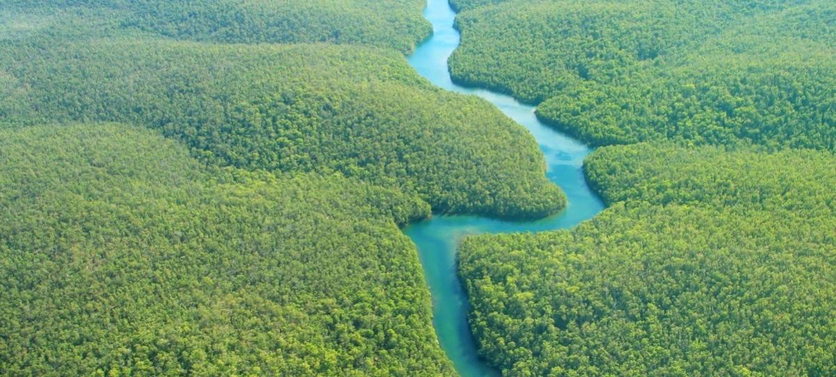 Brazil, the Amazonia, Football and the Market