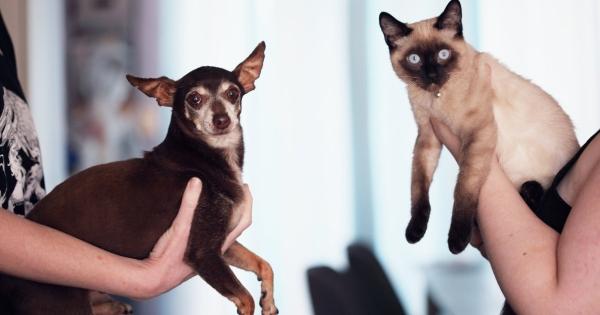 The Social Enterprise: A True Catdog
